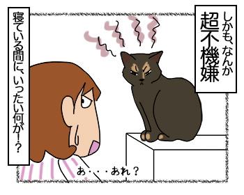 29062017_cat4mini.jpg