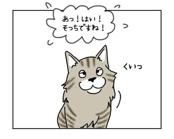 30052017_cat1mini.jpg