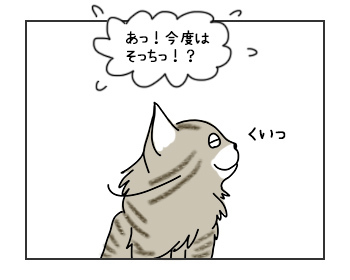 30052017_cat2mini.jpg