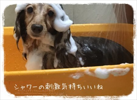 シャワーの刺激