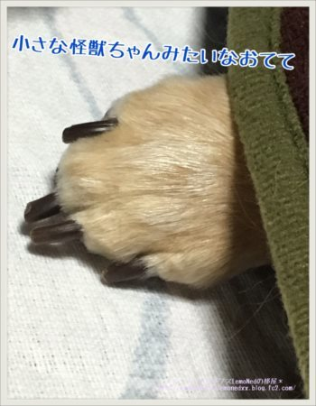 小さい怪獣の手