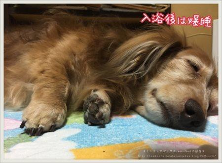 2017/07/06 お風呂後 爆睡