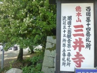 523P1010670三井寺