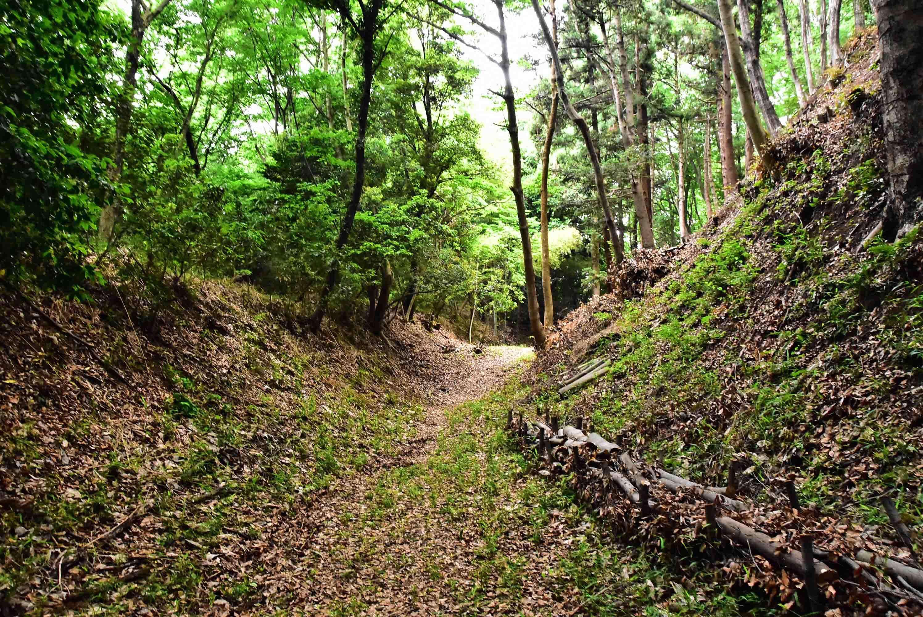 滝山城 三ノ丸南側の堀
