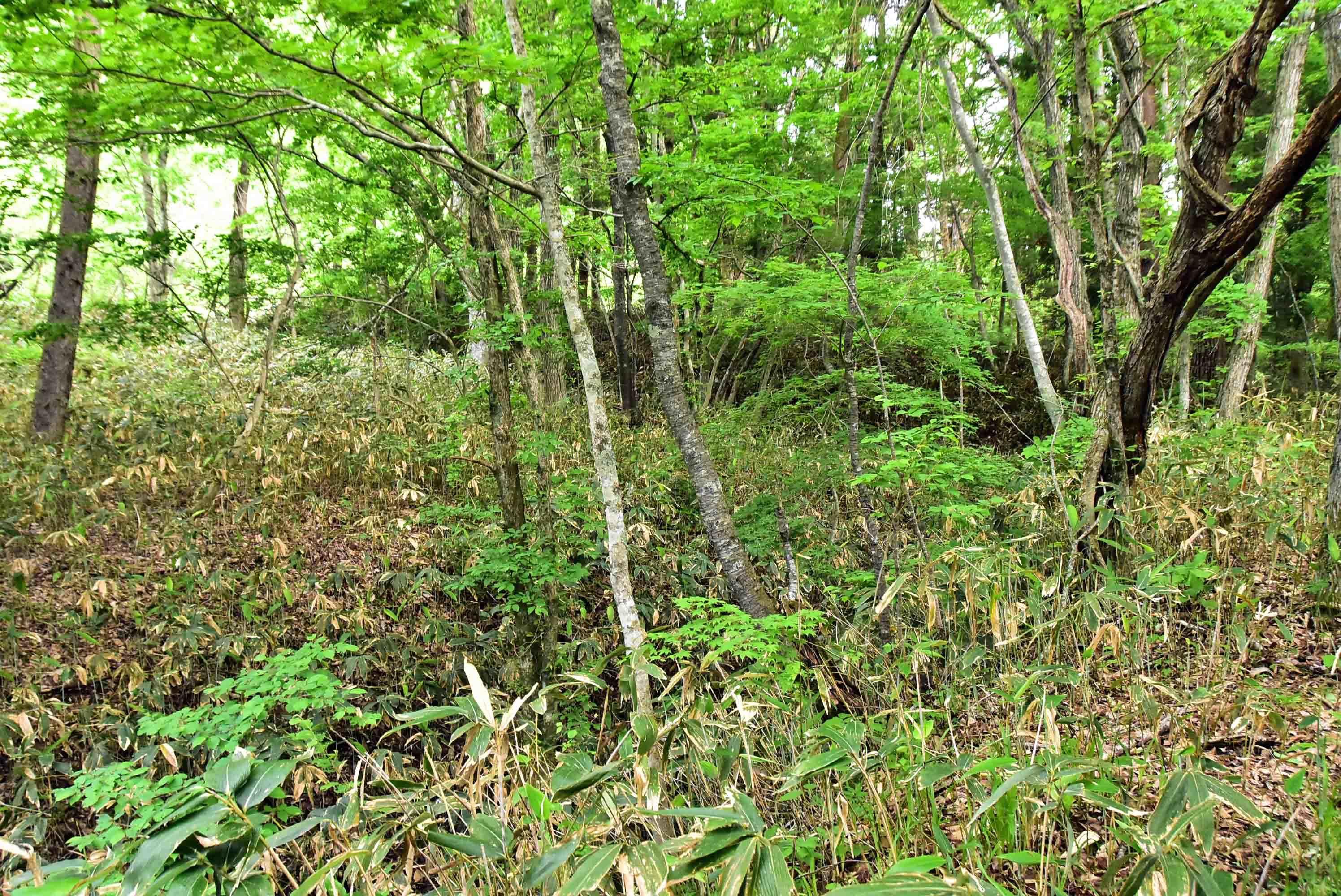鶴が淵城 馬出の堀と長塁
