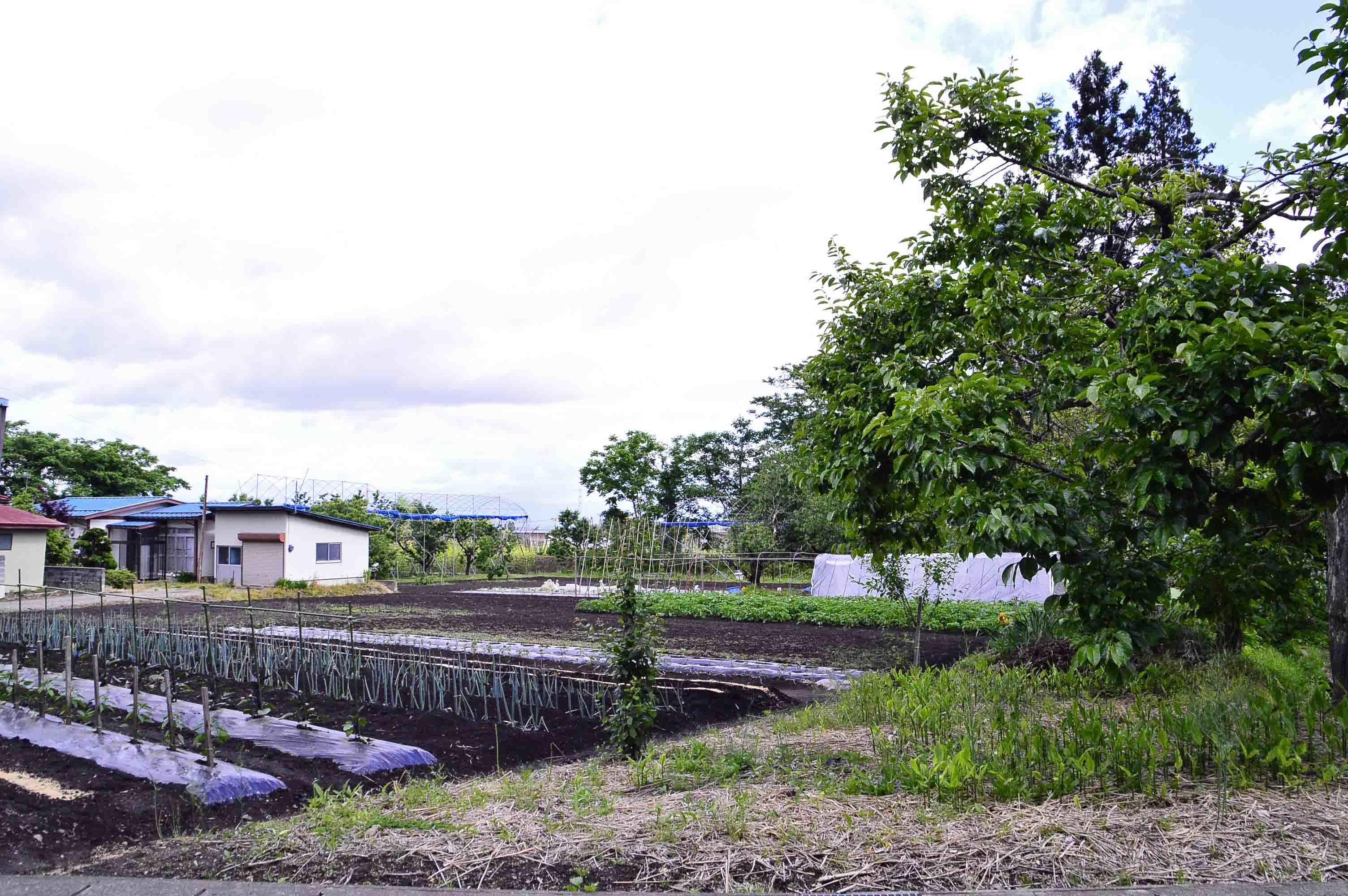 北館 南側からの遠景