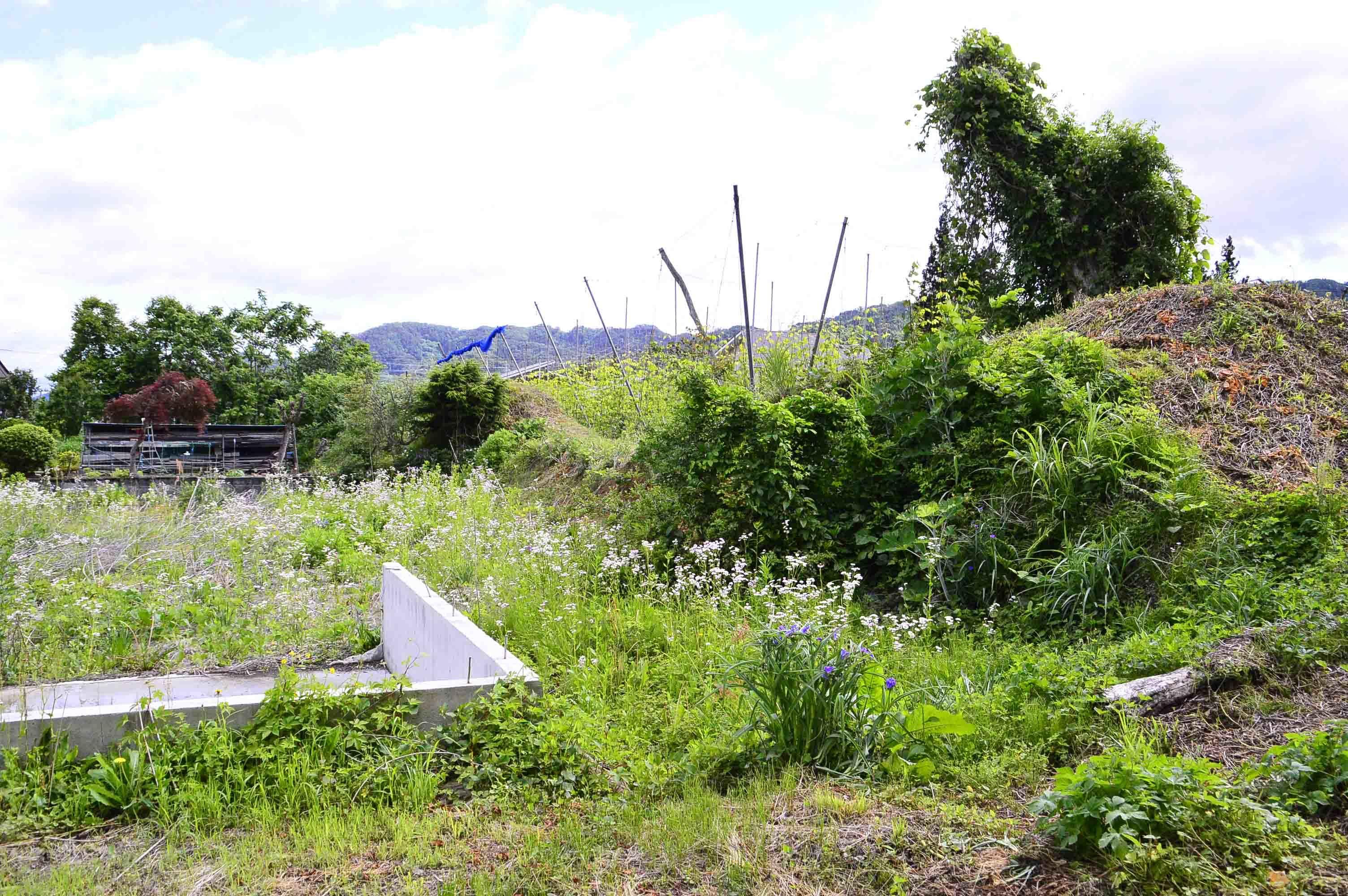 北館 西側堀跡 土塁