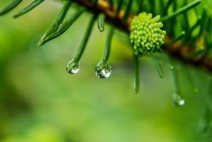 a-drop-of-rain-drop-of-rain-after-the-rain-macro.jpg