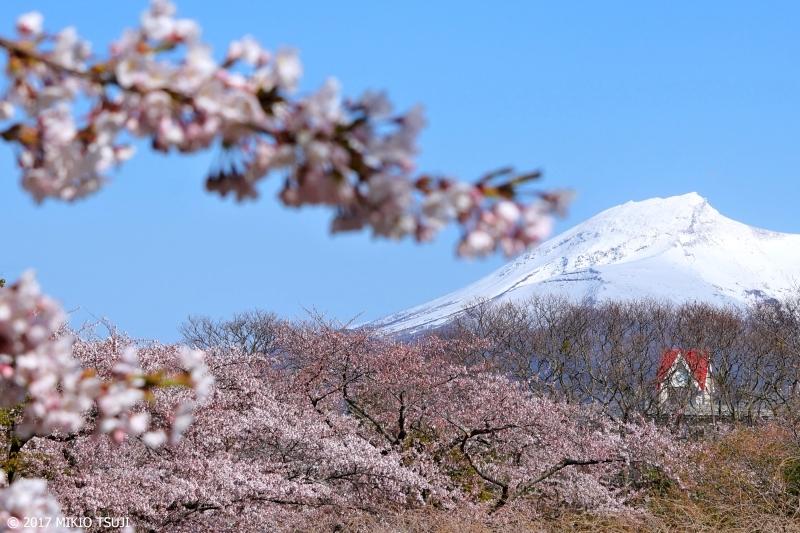 絶景探しの旅 - 0203 桜の森の時計台 (森小学校/北海道 茅部郡森町)