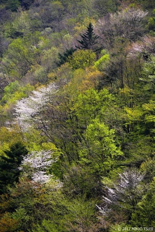 絶景探しの旅 - 0209 山桜街道 (秩父多摩甲斐国立公園/山梨県 甲州市)