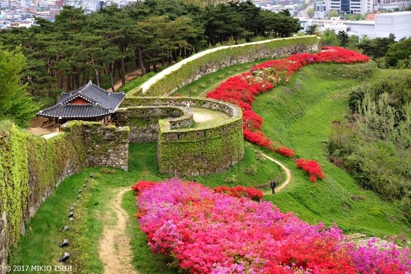 絶景探しの旅 - 0244 赤いツツジの城壁の続く高敞邑城(高敞邑城/韓国 全羅北道)