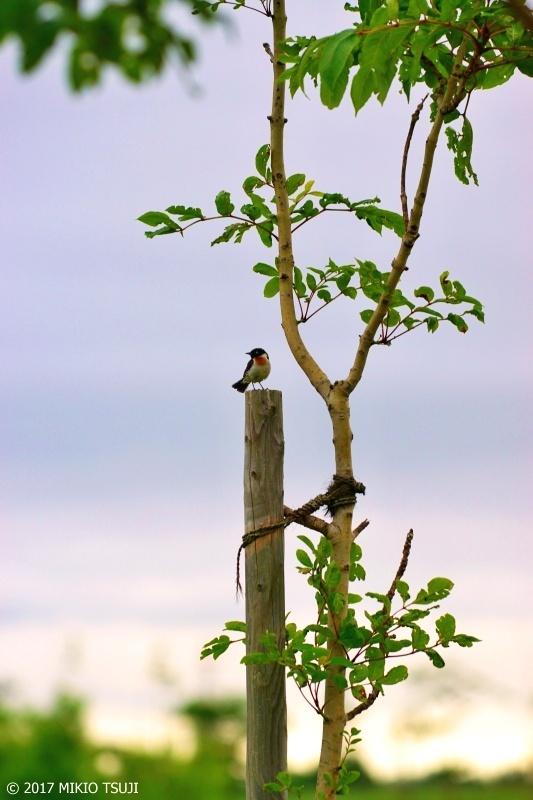 絶景探しの旅 - 0274 茨戸川緑地の夜明け空と (北海道 札幌市 北区)